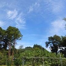 久しぶりの青空。畑さ…