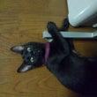 我が家の猫事情