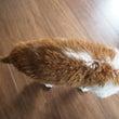 たわしになった猫