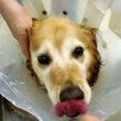 飼い犬チェリーの手術…