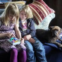 犬猫の恐怖症と分離不…