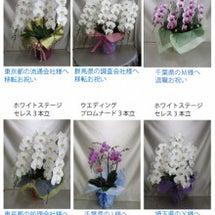 9/26 胡蝶蘭ご注…