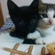子猫2匹譲渡予定とな…