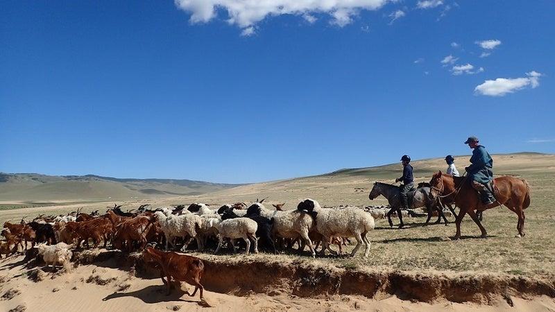 放牧乗馬体験