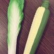 エルパ店に野菜が♡