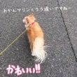 お散歩〜二回目のゆっ…