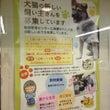 神戸市 ワンニャン譲…