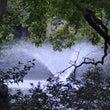 井の頭自然文化園散歩