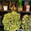 Flower Tak…