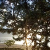 琵琶湖。煌めく。