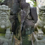 本覚寺の狛犬!
