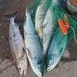 週末の釣り取材開始