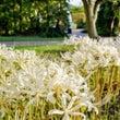 イギリス庭園的ヒガン…