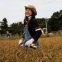 2016稲刈り体験イ…