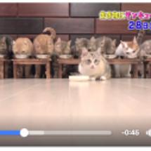 11匹の猫たち