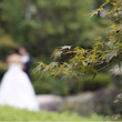 my wedding…