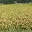 草刈・・・