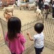 移動動物園→プラザ→…