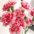 今日のサロンの花はカ…