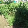 この夏の庭のまとめ