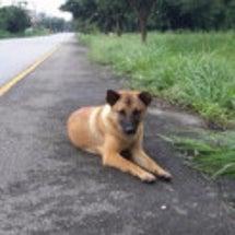 タイの忠犬ハチ公、道…