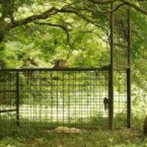 静かな森にこんなもの…