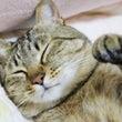 ◆本日は『招き猫の日…