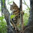 ◆木登り大好き招き猫…