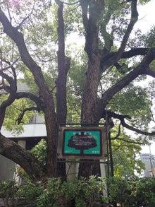20150812864保護樹木