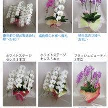 9月29日本日の胡蝶…