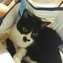 ね。。ね。。猫でお楽…