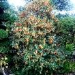●香りで秋を感じる