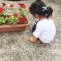 幼稚園選びと三歳児検…