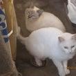 たくさんの野良猫と苦…