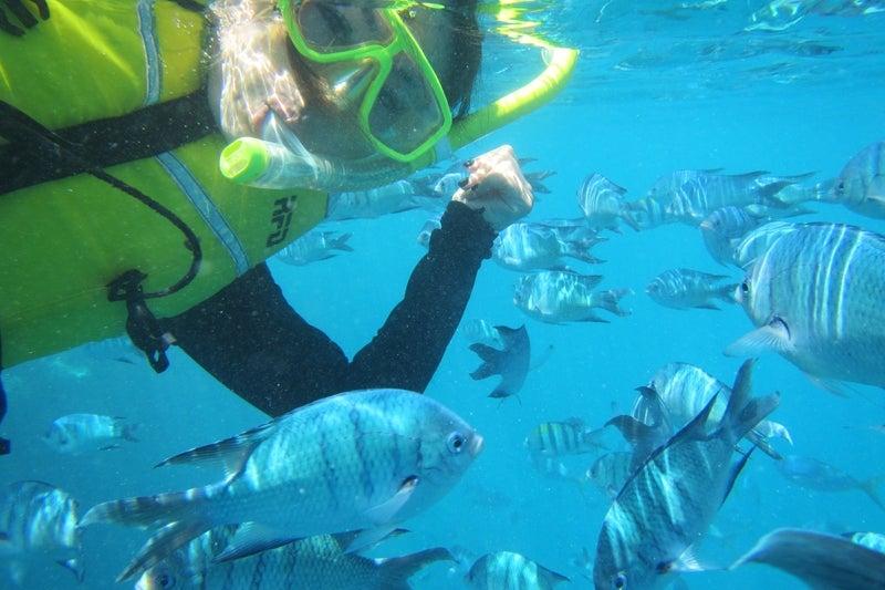 ReefWorld2