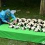 ★赤ちゃんパンダに癒…