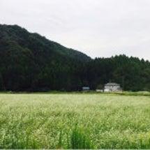 ☆ひとりで福井へ☆
