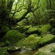 午後からの静かな森時…