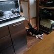 ごんぼさんの台所