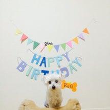 愛犬20歳になる
