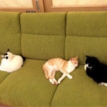 猫カフェ〜♡