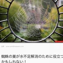 蜘蛛の巣と自然の摂理