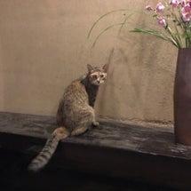 猫のいる温泉宿