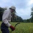 農に学ぶ  今日の農…