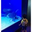 EPSON水族館 4…