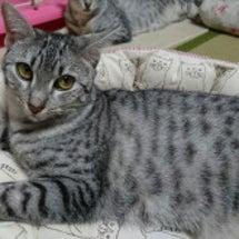 猫ベッドのお友達(奈…