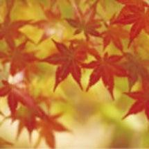大塚みや穂☆10月の…