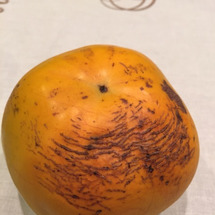 太秋柿!!