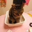 水切りに猫入る