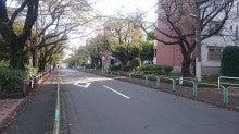 高森の街路樹です